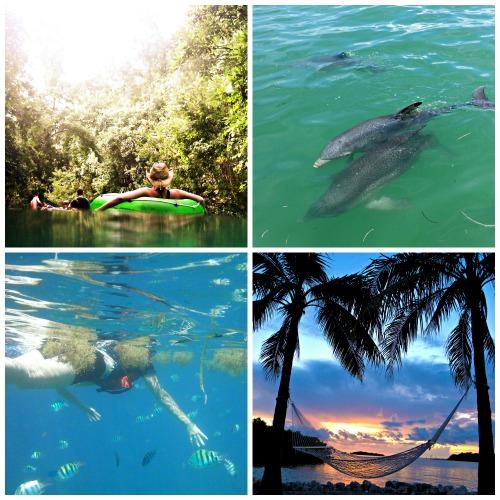 florida keys, hammock, dolphins