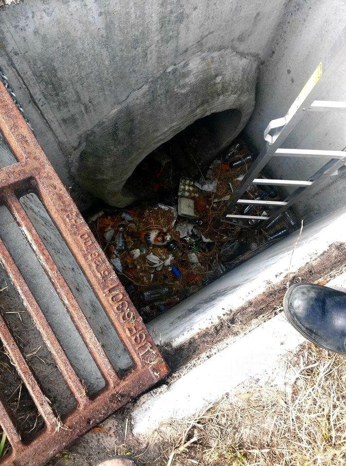 kitten in storm water drain